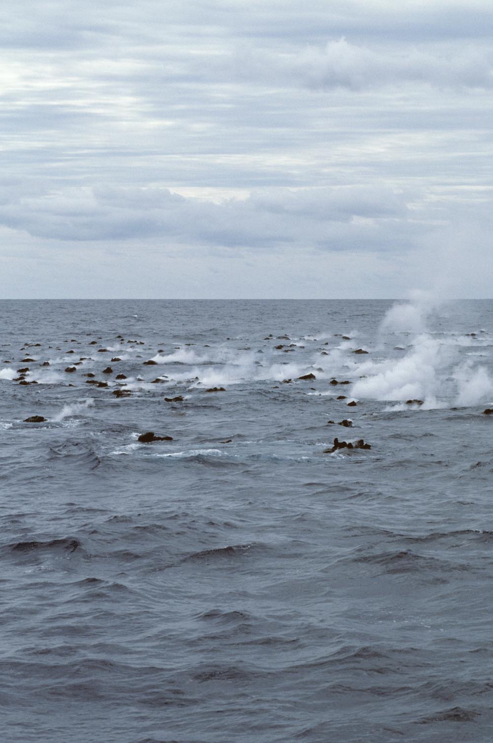 Ocean Magic Productions Grey Whales Socorro.png