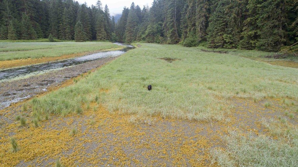 3. Black bear yonder.jpg