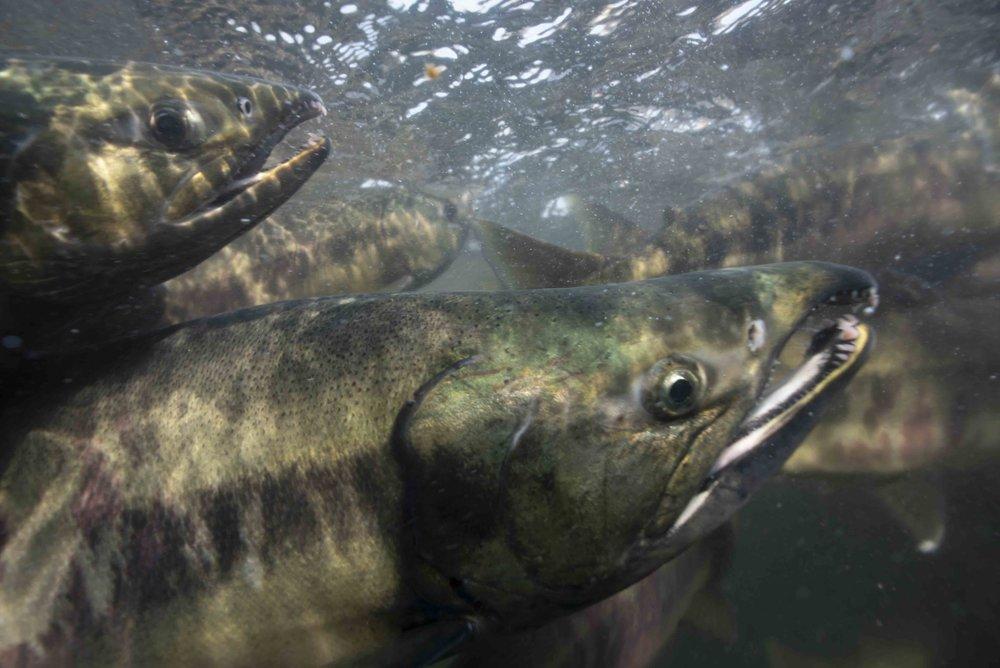 12. Salmon Pack Creek.jpg
