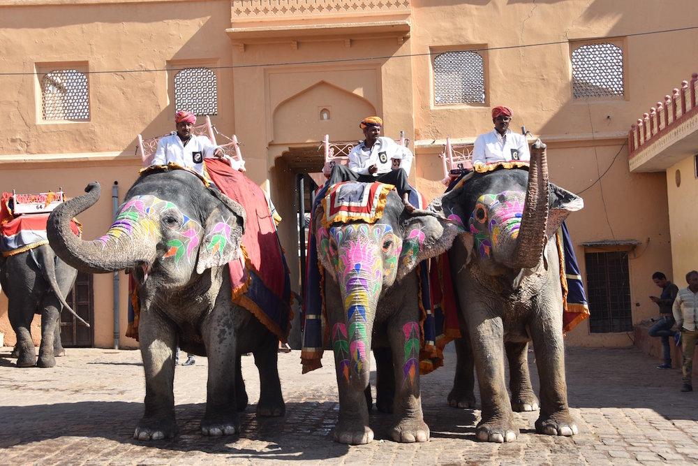 The elephants that we rode up the the entrance of Amer Fort (also known as Amber Fort)
