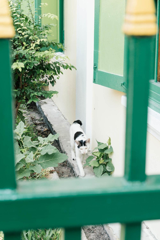 Cute cat near Wat Ben