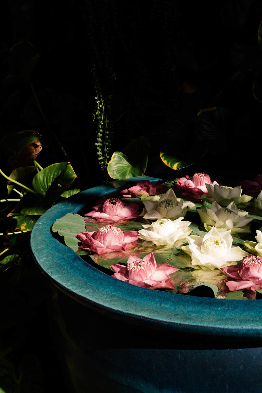 Lotus Flower at Jim Thompson House Museum Bangkok