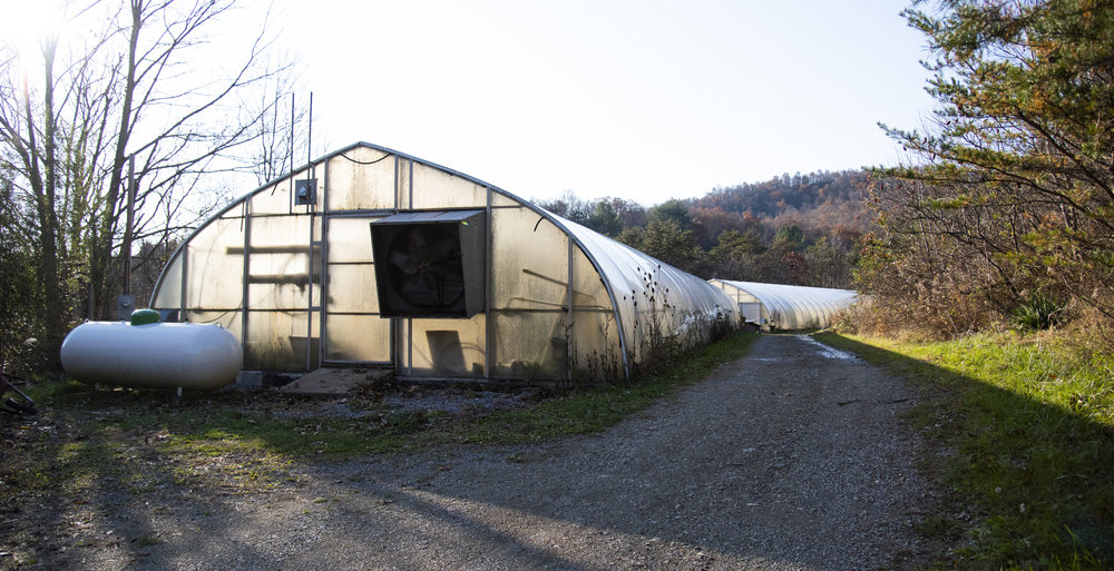 Two community greenhouses are tucked away in Julian Woods. The first greenhouse is used for wastewater treatment, and the second greenhouse is used by Deb Fisher for growing dahlias that she sells at the Downtown State College Farmers Market.