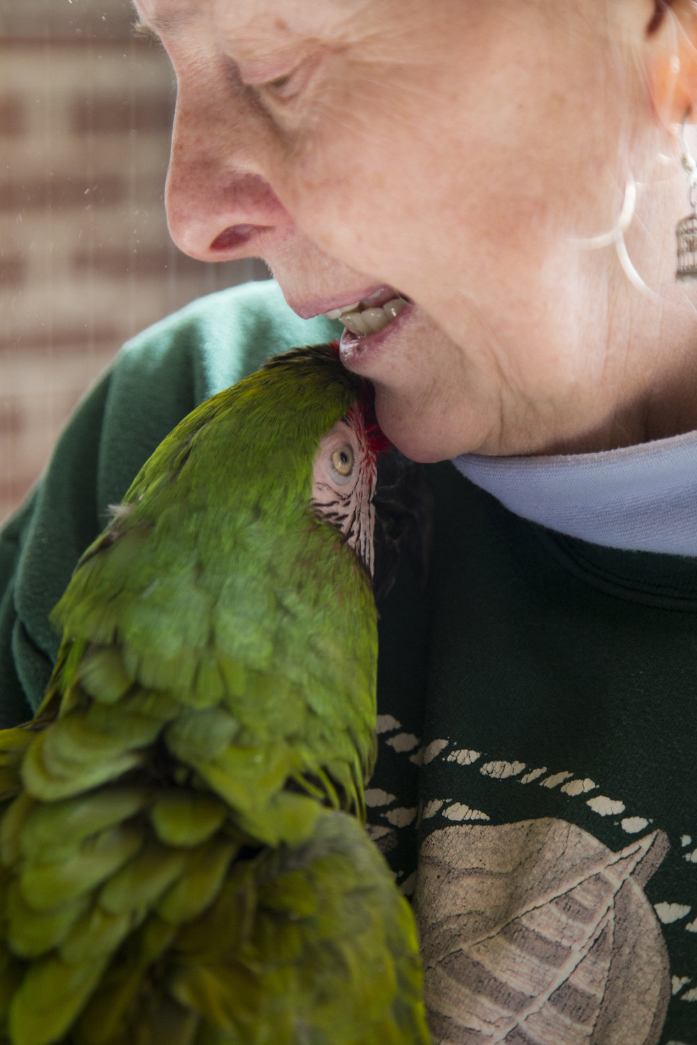 Throughout the day, the birds will take turns getting out-of-cage time. Sandy can cuddle, wrestle, and kiss most of her birds. Roscoe, a military macaw, loves to spend time with her.