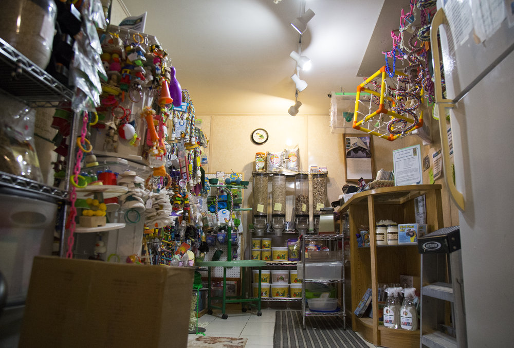 Included in her open house is Sandy's store. She offers bird toys, cages, and food. Sandy doesn't spend a significant amount of time in her store, but she keeps it fully stocked for her birds and birds of community members.
