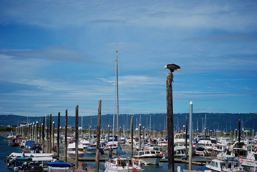 homer-docks.jpg