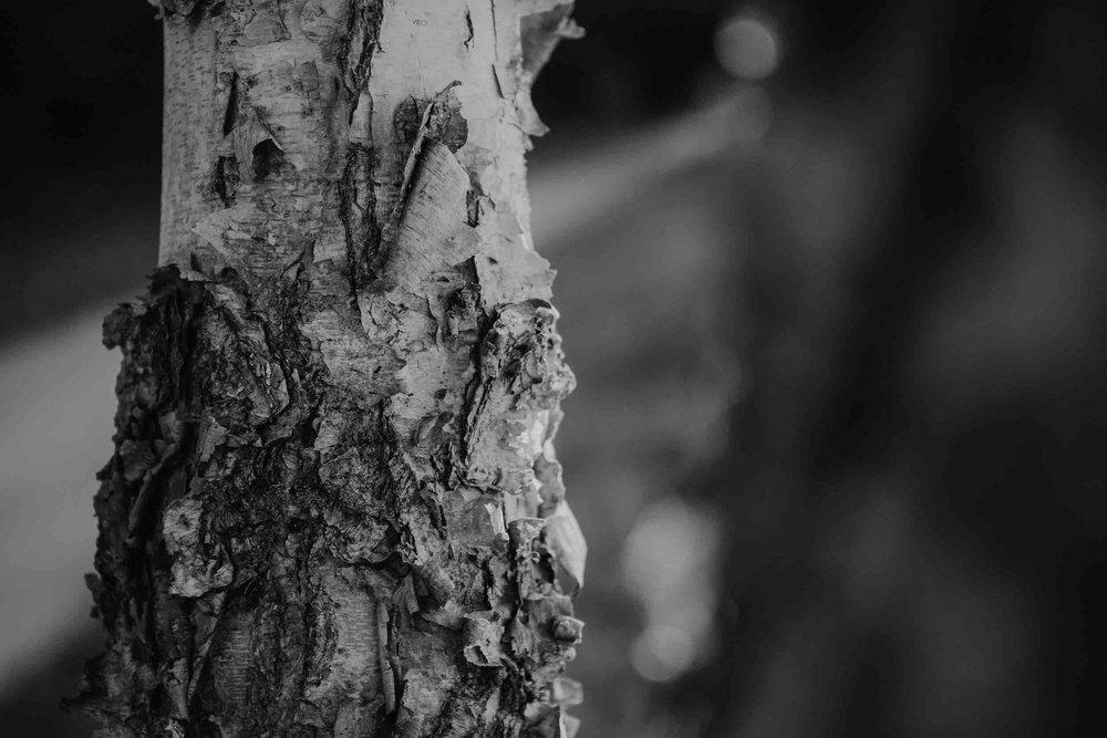 iii-tree-2.jpeg