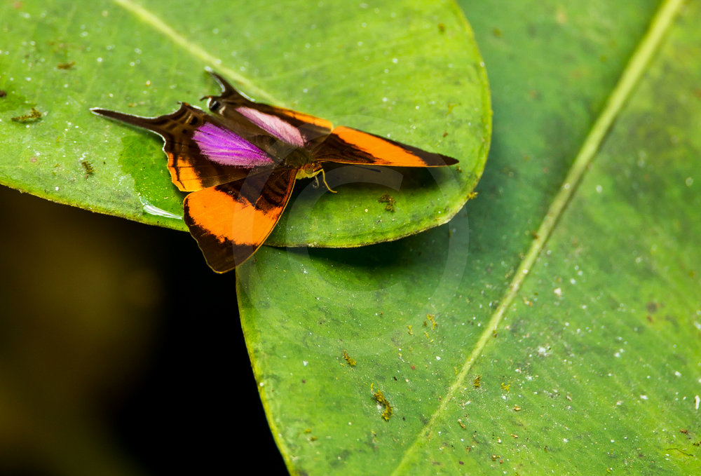 Tropical Butterfly