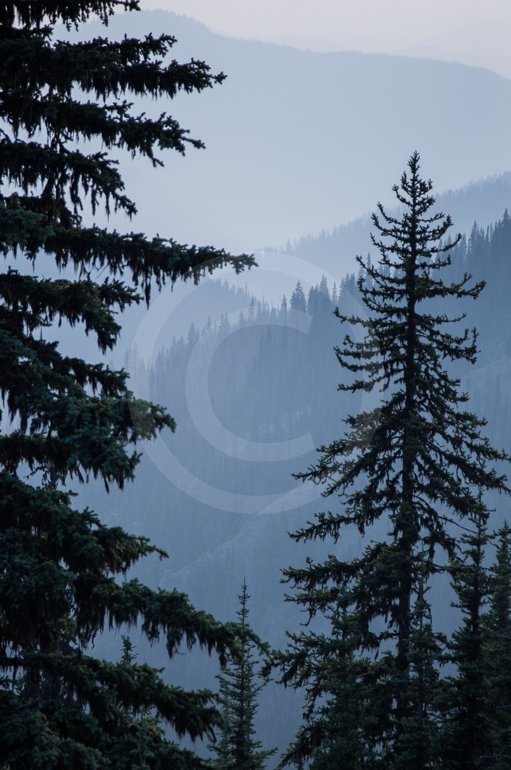 "E.C. Manning Provincial Park ""Layers"""