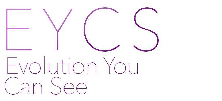 """The idea - E.Y.C.S. stands for """"Evolution You Can See"""". Our group wanted to create a product that can simulate how hair styles change over time, taking into account personal habits and environmental factors."""