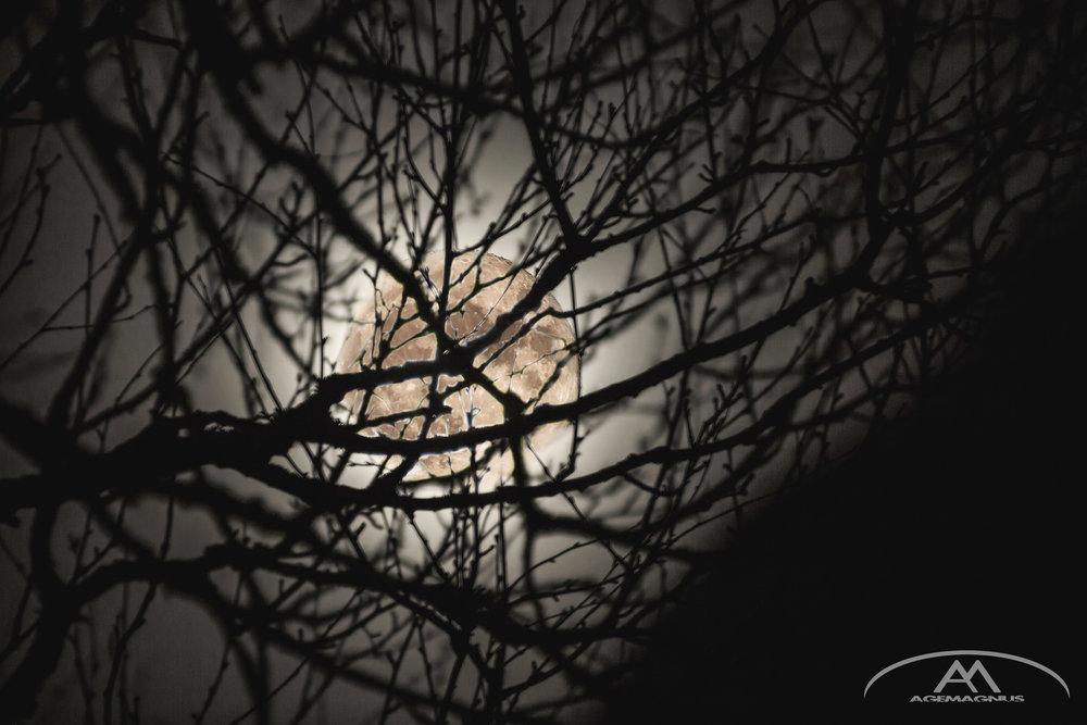 Måne bak busk gul filter-2.jpg