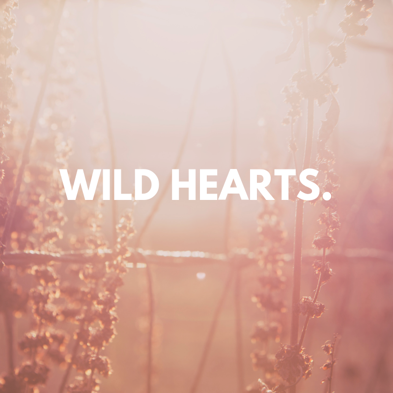 WILD HEARTS.png