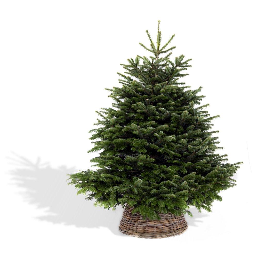 Forest & Fir - Full Tree with Skirt.jpg