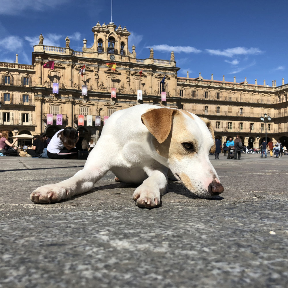 Descansando en la Plaza Mayor de Salamanca.