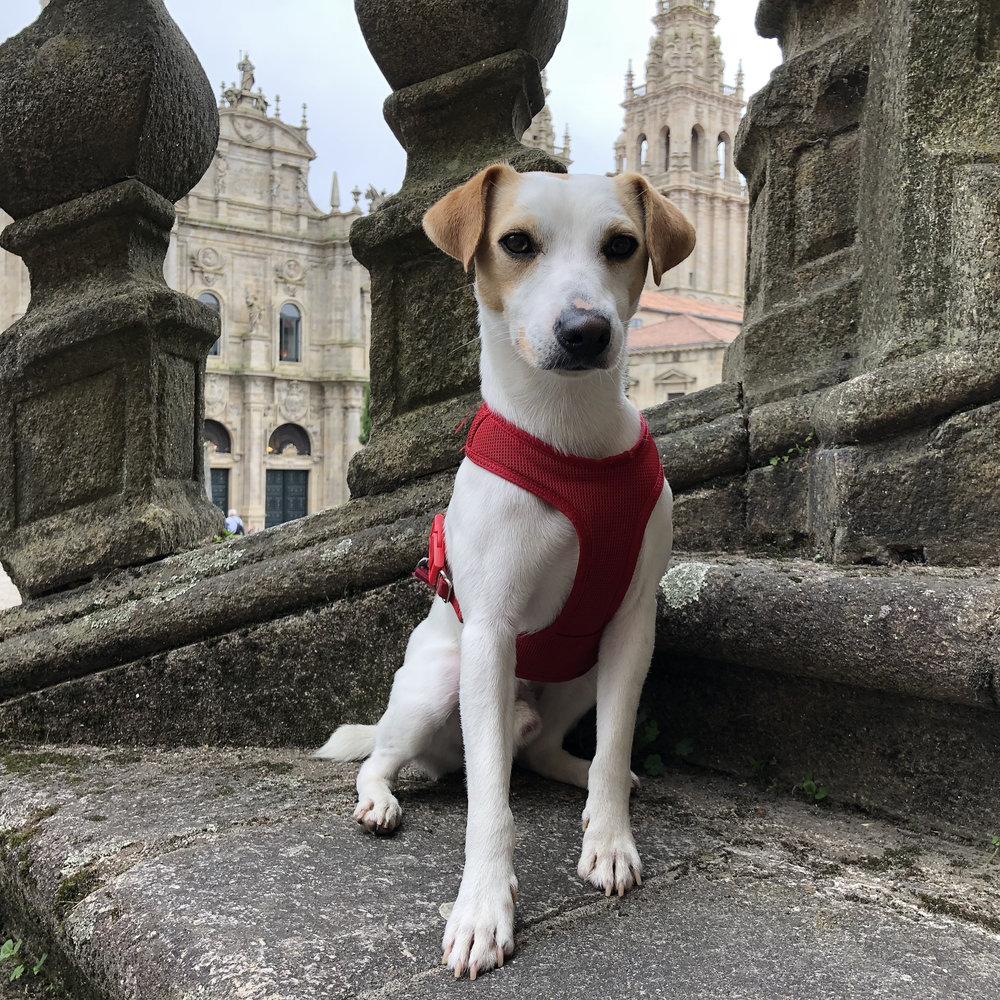 Pipper en la plaza de la Inmaculada.