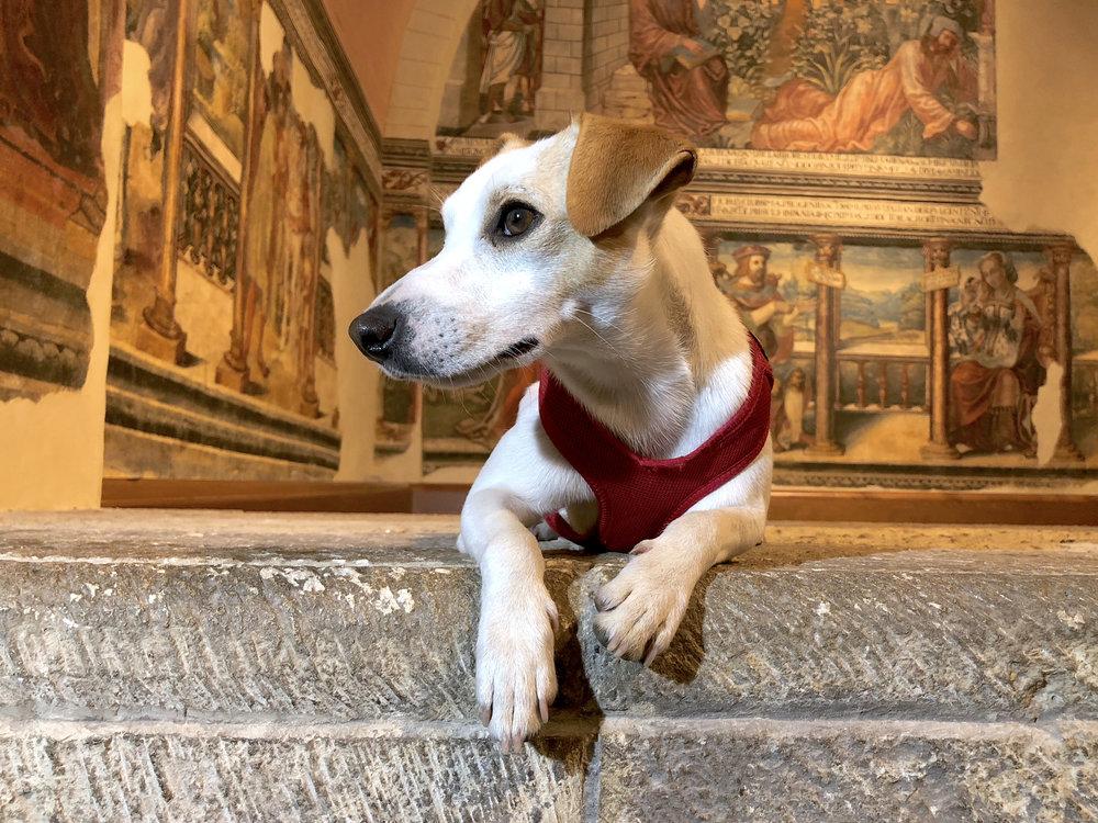 Pinturas renacentistas de la sala Capitular de la Real Colegiata de San Isidoro.