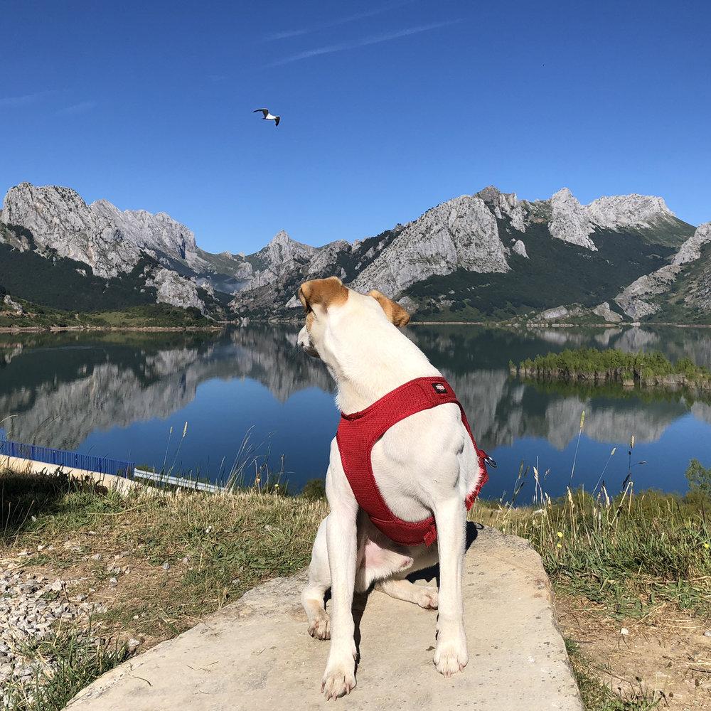 Flipando con un pájaro en Riaño (Picos de Europa).