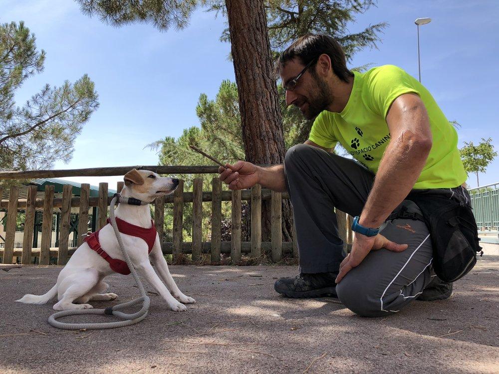 Con Jorge, de Espacio Canino Palencia, repasando ejercicios.