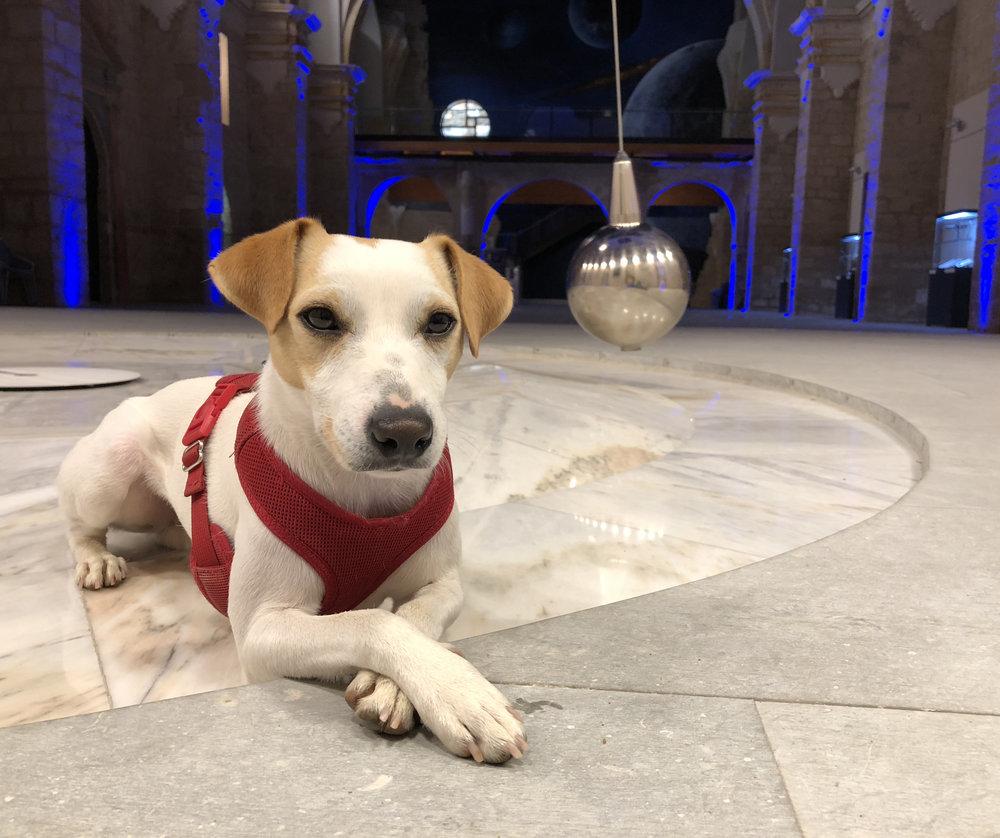Pipper durante su visita a San Pedro Cultural en agosto de 2018.