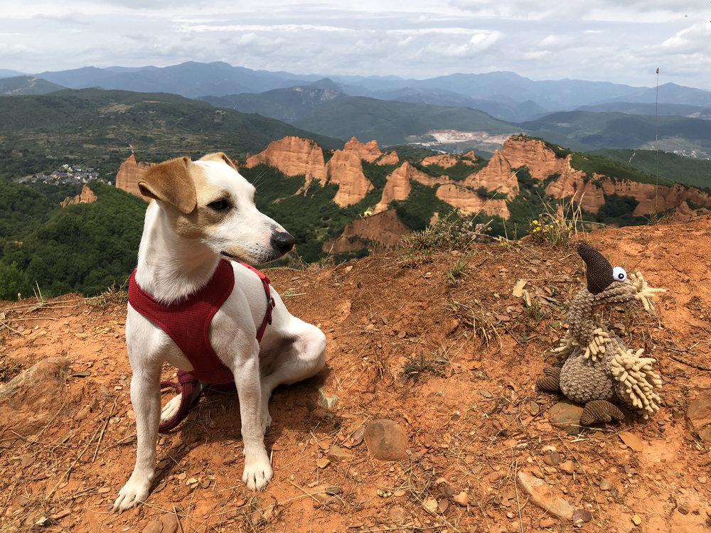 Pipper en su visita a Las Médulas en julio de 2018 con el buitre Gustav.