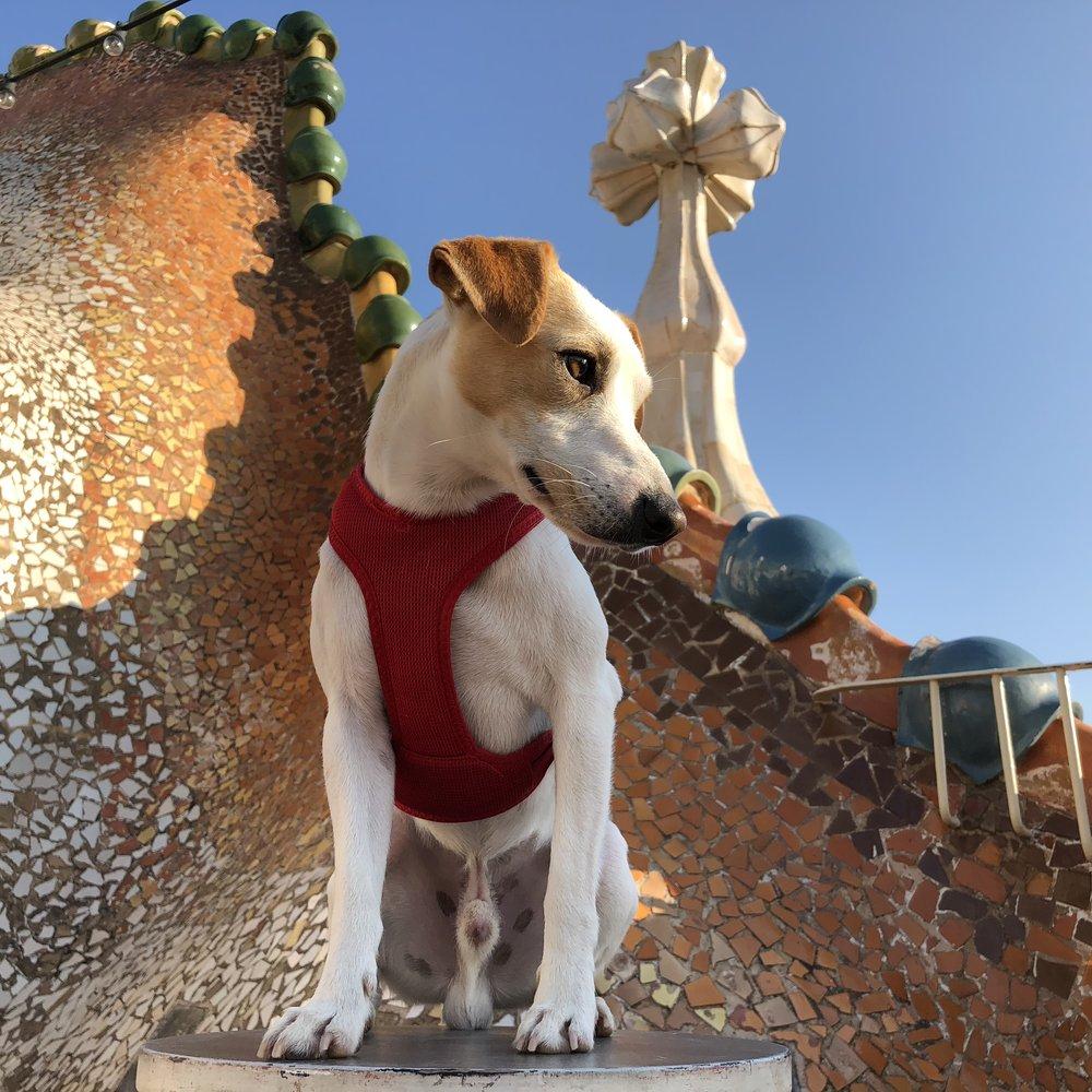 Azotea de Casa Batlló.