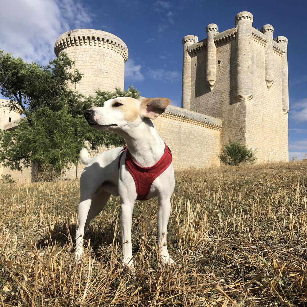 En el Castillo de los Comuneros de Torrelobatón.