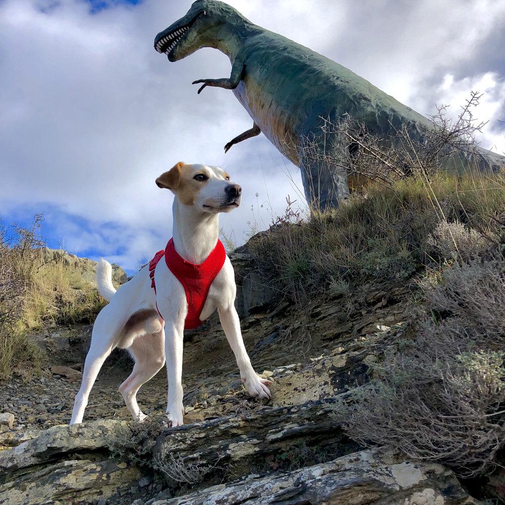 En la ruta de los dinosaurios de Enciso.