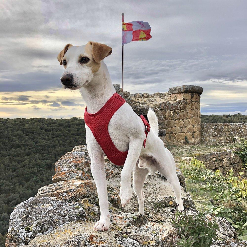 En el castillo de Pedraza.