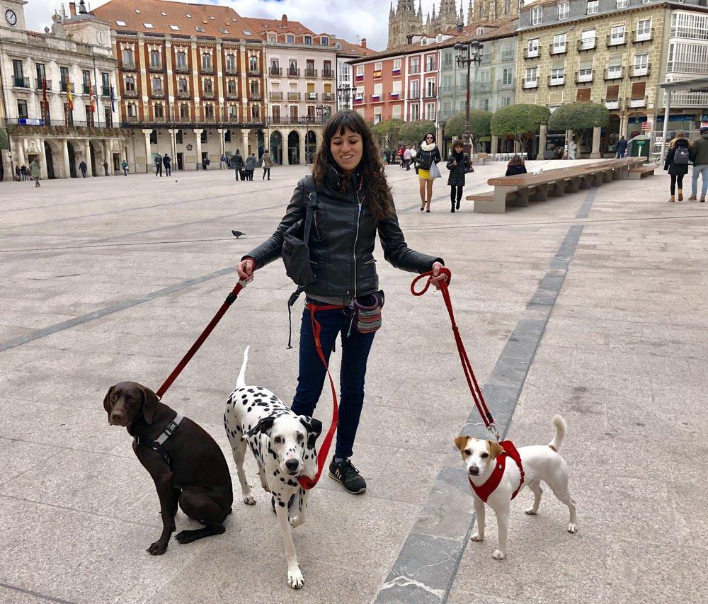 En la Plaza Mayor de Burgos.
