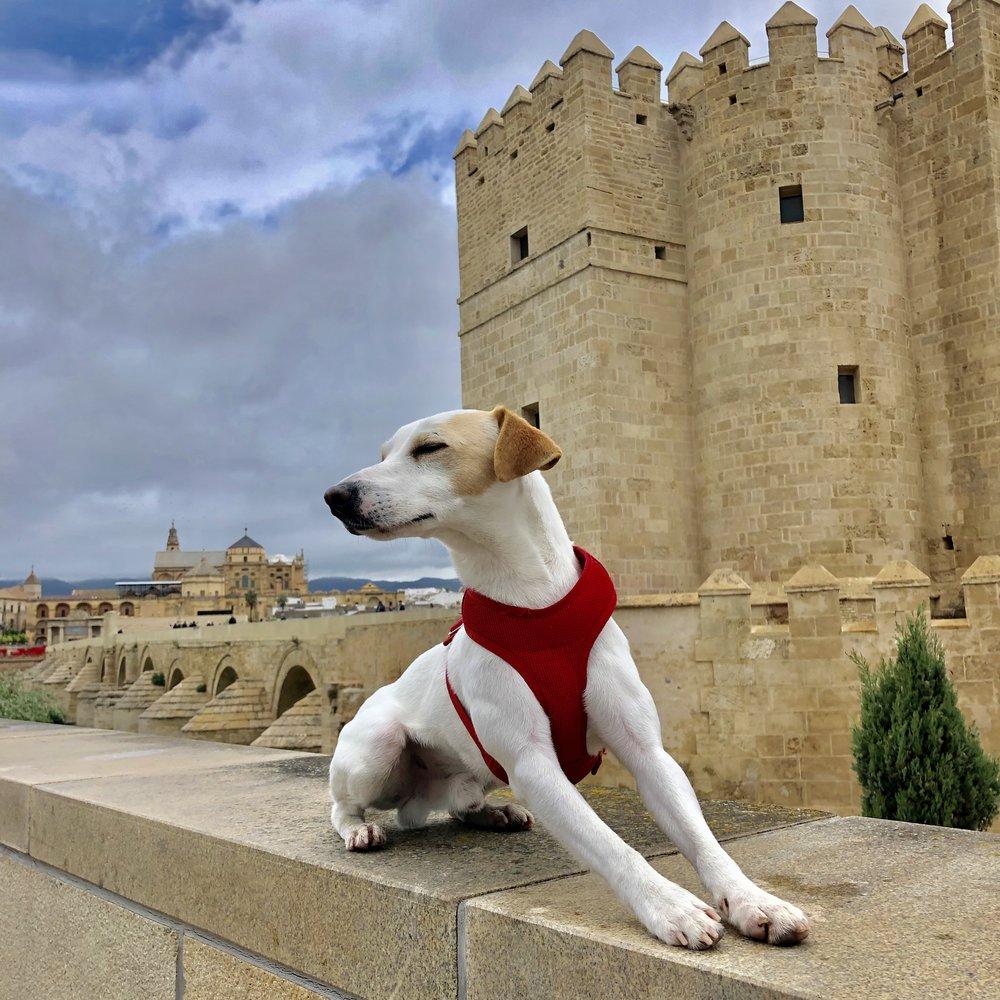 Junto a la torre de La Calahorra y el Puente Romano.