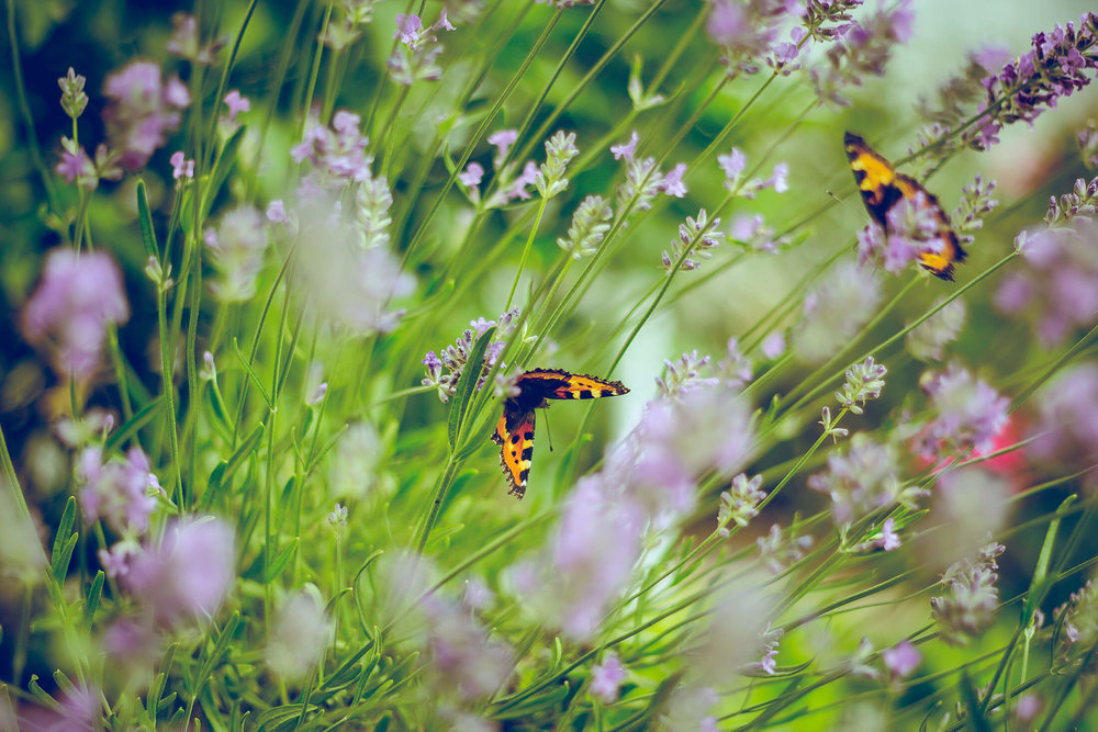 Wandsworth Common Butterflies