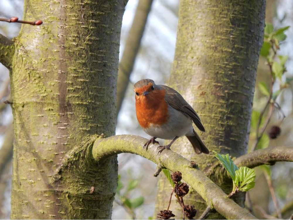 Wandsworth Common Nature Walks