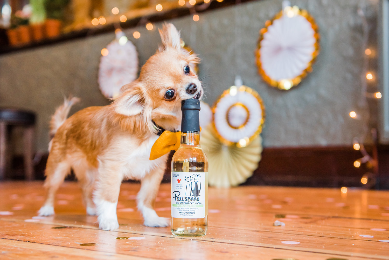 Dog drinking pawsecco.jpg
