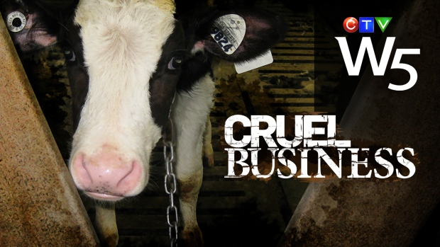 "W5's ""Cruel Business"" - Parts I and II"
