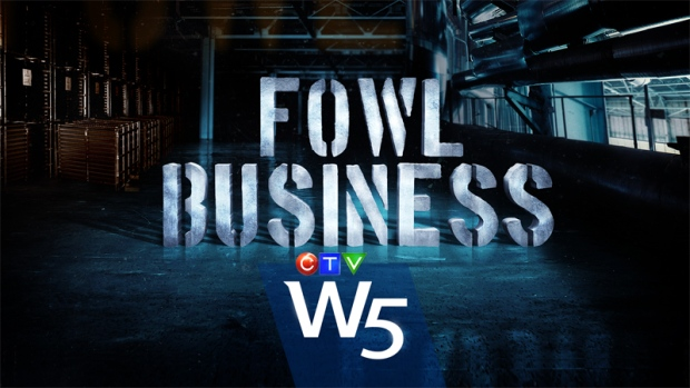 "W5""s ""Fowl Business"" - Parts I, II and III"