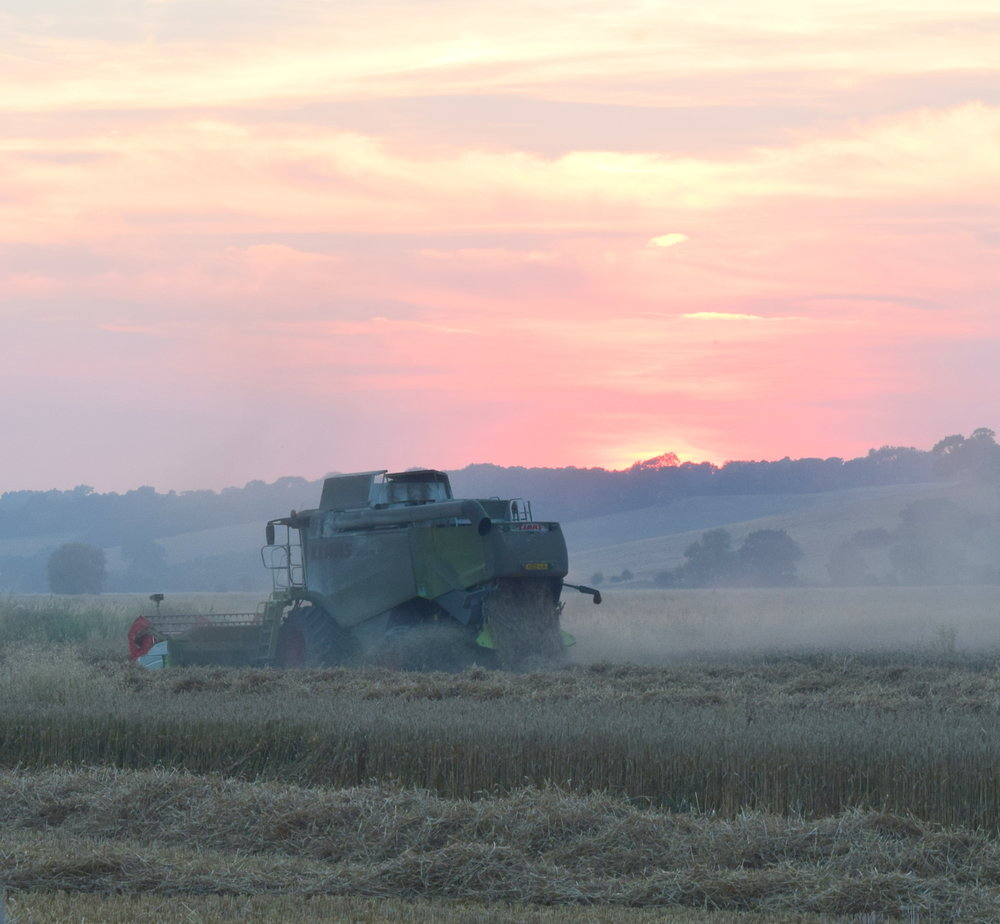 Combining barley August 2018