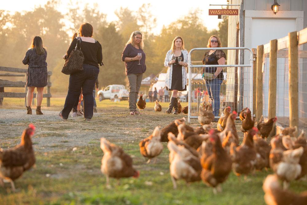 Free Range Chicken Vancouver Fraser Valley.jpg