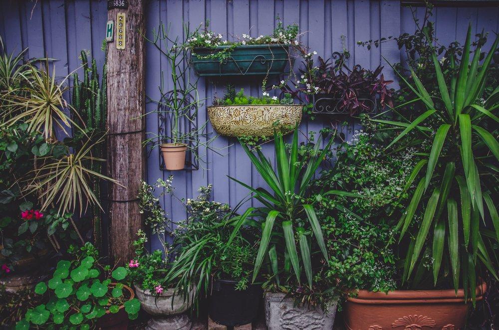 community garden benefits women.jpg