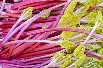 forced-rhubarb-web.jpg