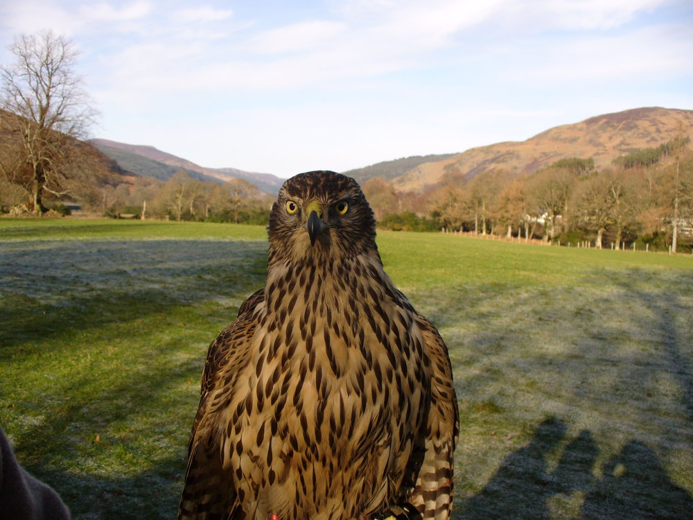 Bringing Falconry values to Europe's future -