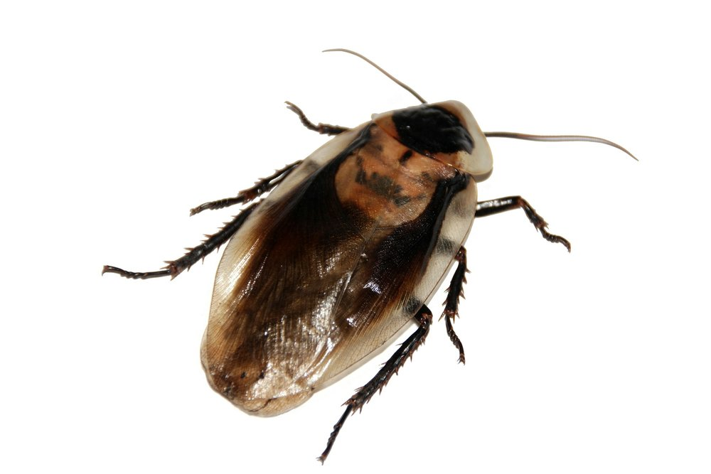 cockroach-566712_1920.jpg