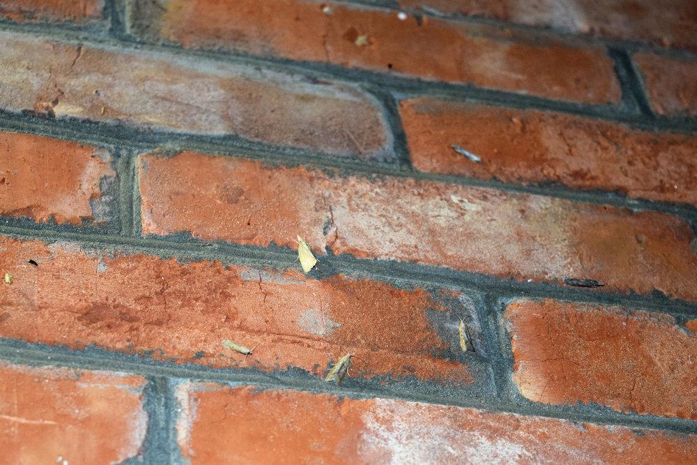 Moth Pest Control Curdworth.jpg