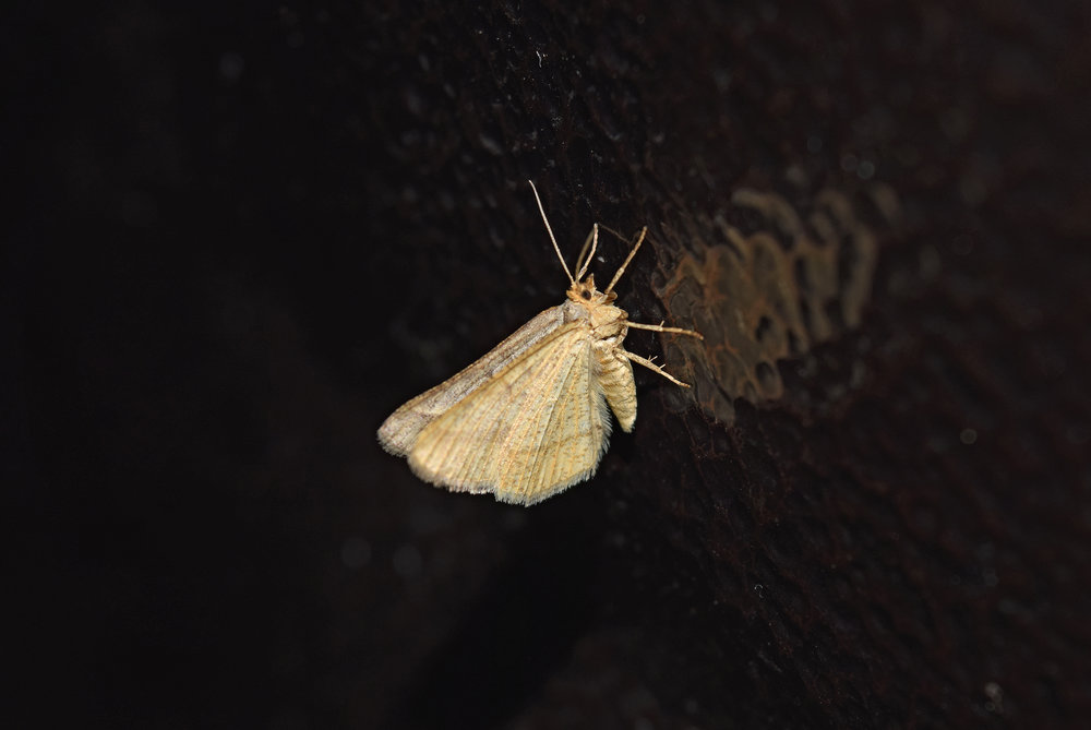Moth Pest Control Water Orton.jpg