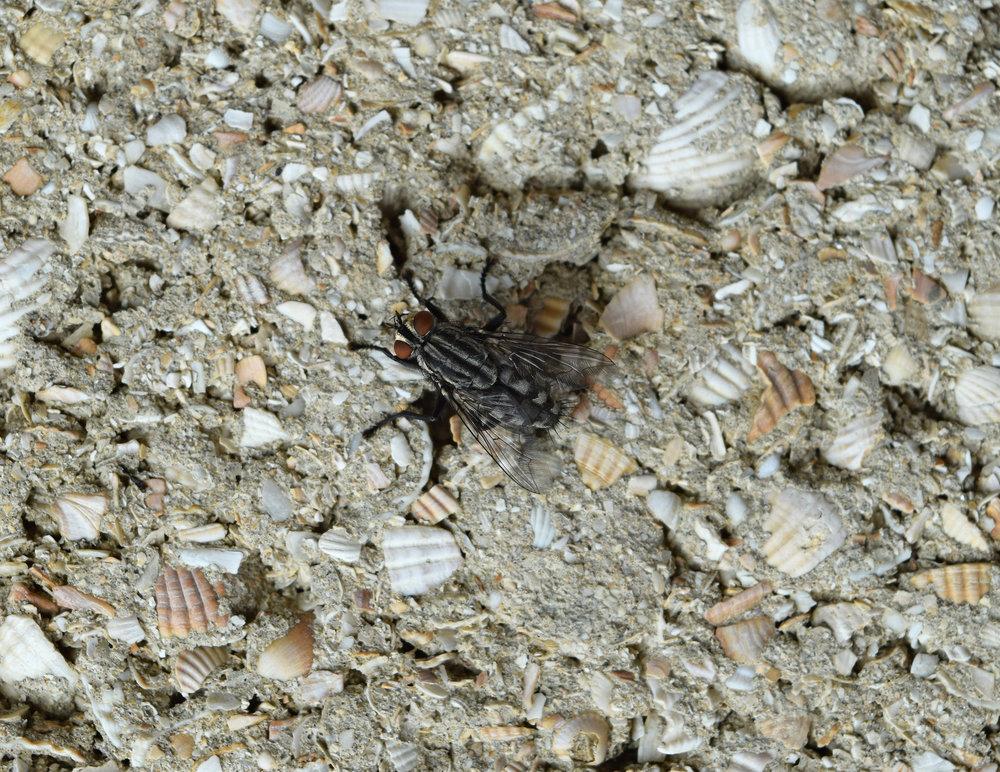 Fly Infestation Pest Control Lea Marston.jpg