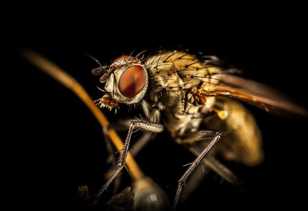 Fly Infestation Pest Control Water Orton.jpg