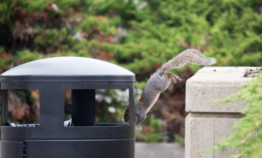 Squirrel Pest Control Coleshill.jpg