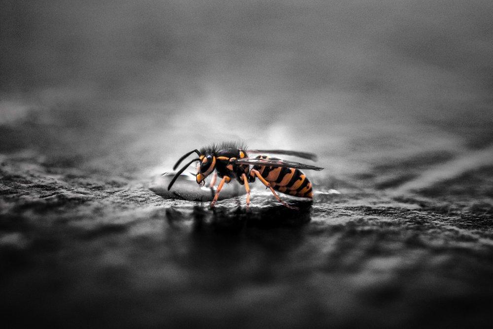 Wasp Pest Control Services Castle Bromwich.jpg