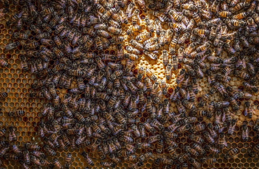 Bee Pest Control Services Water Orton.jpg