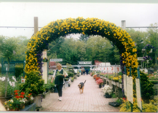 Spring Pansy Floral Arch
