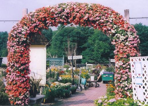 Summer Impatiens Arch
